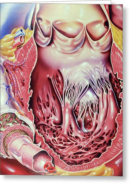 Left Ventricle Of Heart Greeting Card by John Bavosi
