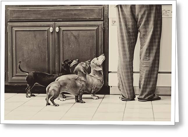 Hounddog Greeting Cards - Legs Greeting Card by Johnny Ortez-Tibbels