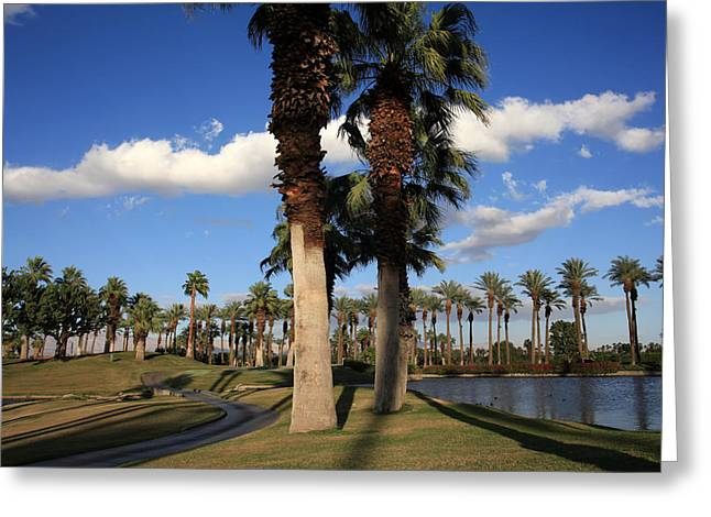 Palm Tree Reflection Greeting Cards - Leisure Greeting Card by Laurie Search