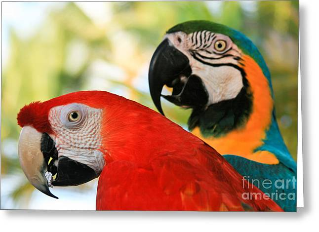 Love The Animal Greeting Cards - Lele Greeting Card by Sharon Mau