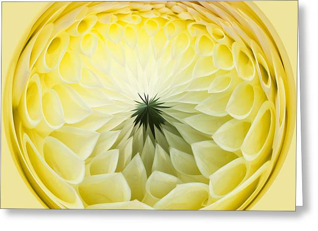 Close Focus Floral Greeting Cards - Lemon Lady Greeting Card by Anne Gilbert
