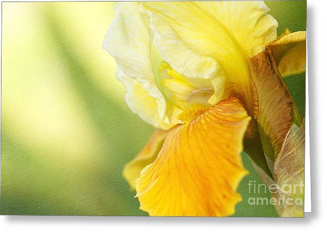 © Beve Brown-clark Greeting Cards - Lemon Lime Greeting Card by Reflective Moments  Photography and Digital Art Images