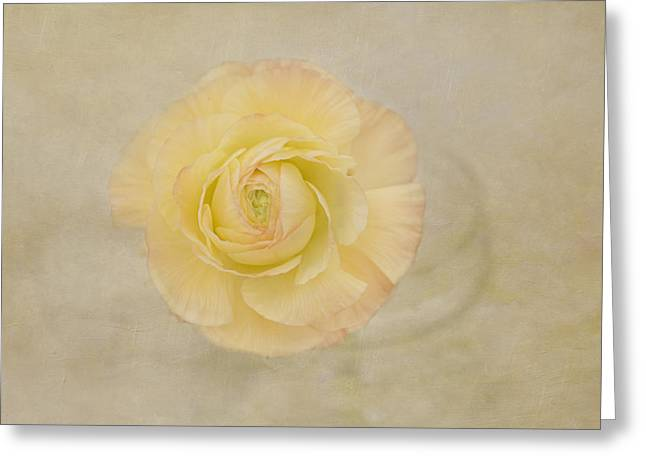 Sweetness Greeting Cards - Lemon Pastels Greeting Card by Kim Hojnacki