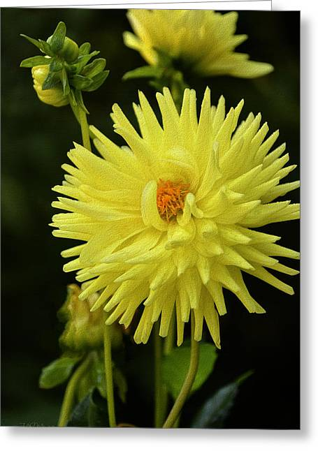 Lemon Art Greeting Cards - Lemon Tart Dahlia Greeting Card by Julie Palencia