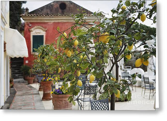 Lemon Trees on a Villa Terrace Greeting Card by George Oze