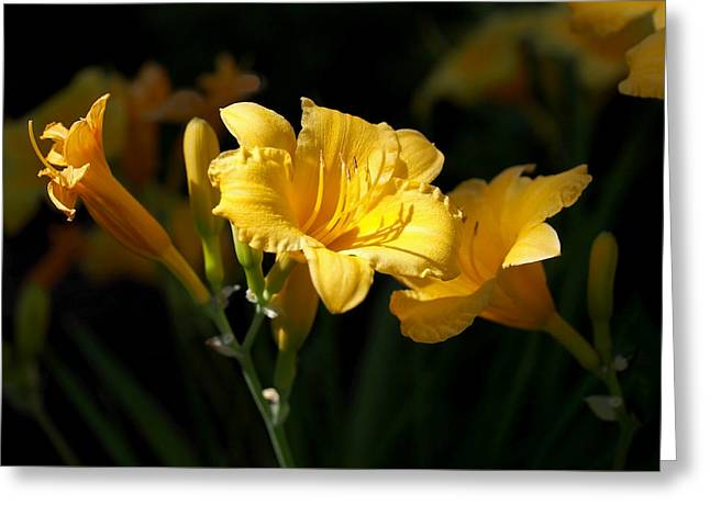 Lemon Yellow Daylilies Greeting Card by Rona Black