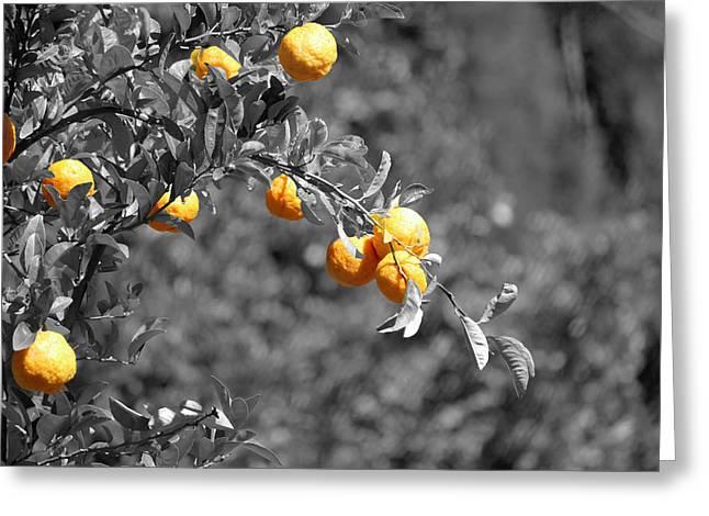 Stellenbosch Photographs Greeting Cards - Lemons Greeting Card by Chris Whittle