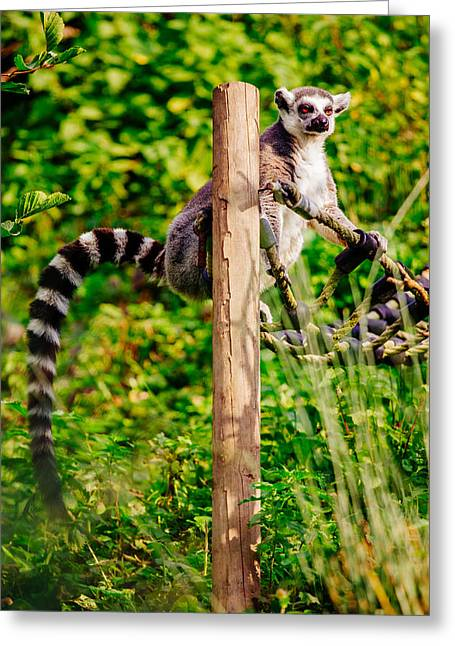 Lemur In The Green Greeting Card by Pati Photography