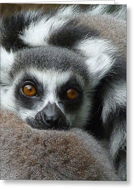 Saheed Greeting Cards - Lemur Leisure Time Greeting Card by Margaret Saheed