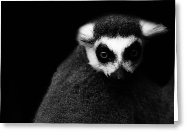 Lemur Greeting Card by Martin Newman