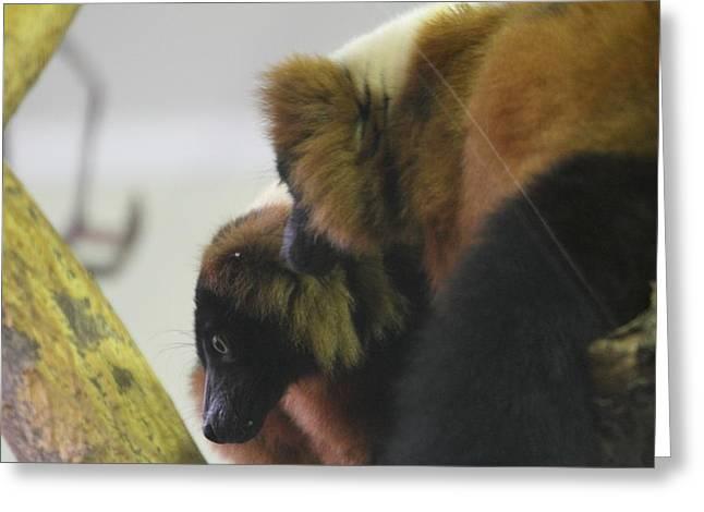Lemur Greeting Cards - Lemur - National Zoo - 01132 Greeting Card by DC Photographer