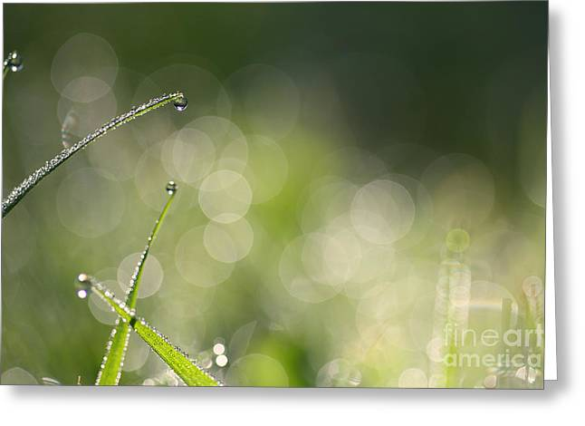 Green Blade Of Grass Greeting Cards - Lensflares Greeting Card by Jana Behr