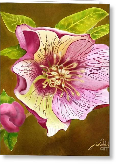 Joan A Hamilton Greeting Cards - Lenten Rose Greeting Card by Joan A Hamilton