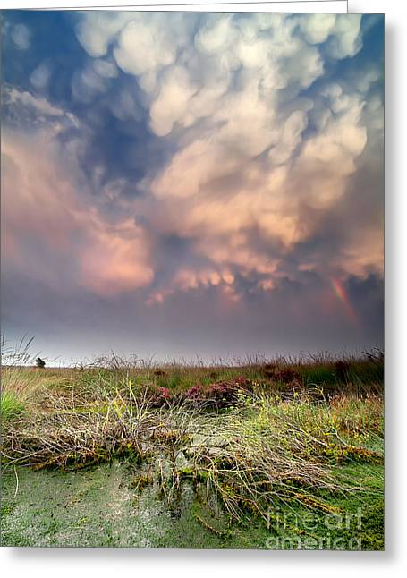 Moss Green Greeting Cards - Lenticular Clouds Over Bog At Sunset Greeting Card by Olha Rohulya