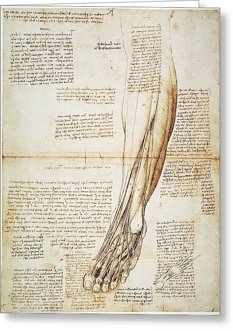 1510 Greeting Cards - Leonardo: Anatomy, 1510 Greeting Card by Granger