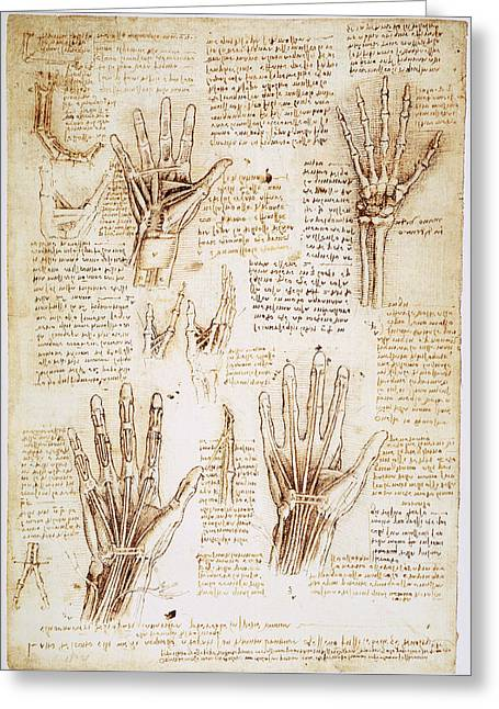 1510 Greeting Cards - LEONARDO: HANDS, c1510 Greeting Card by Granger