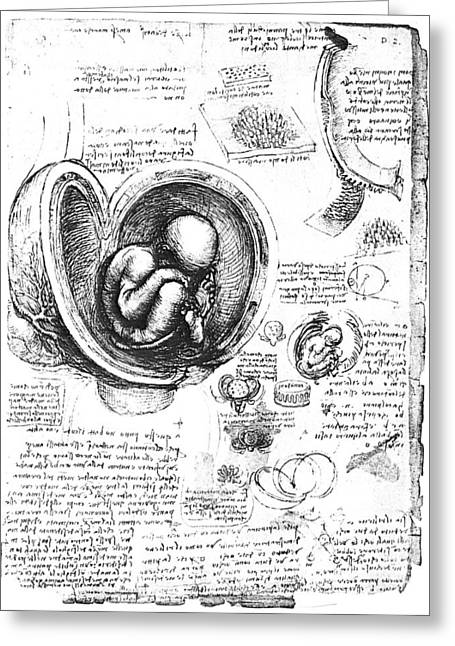 1510 Greeting Cards - Leonardo: Human Fetus Greeting Card by Granger