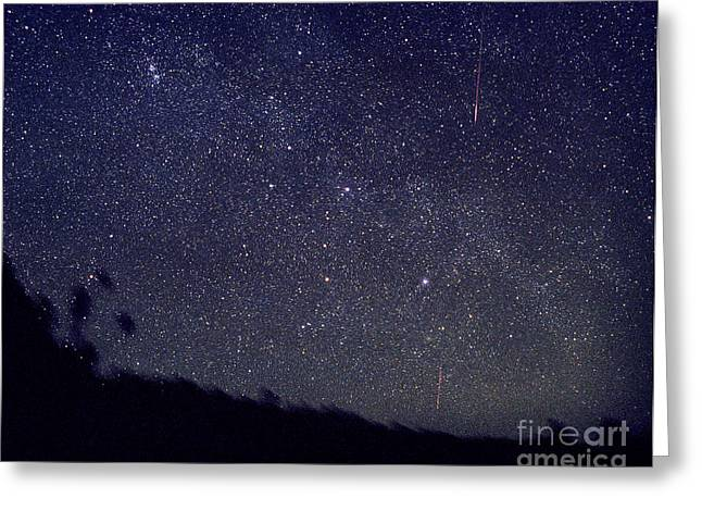 Double Cluster Greeting Cards - Leonid Meteors Greeting Card by John Chumack