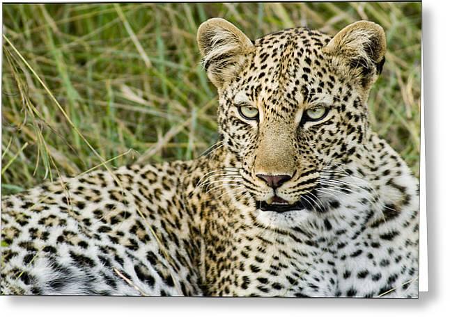 Leopard 1 Greeting Card by Bob Falconer