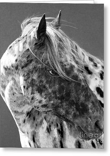 Spotted Horse Greeting Cards - Leopard Appaloosa Greeting Card by Carol Walker