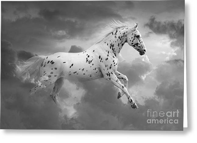 Leaping Greeting Cards - Leopard Appaloosa Cloud Runner Greeting Card by Renee Forth-Fukumoto