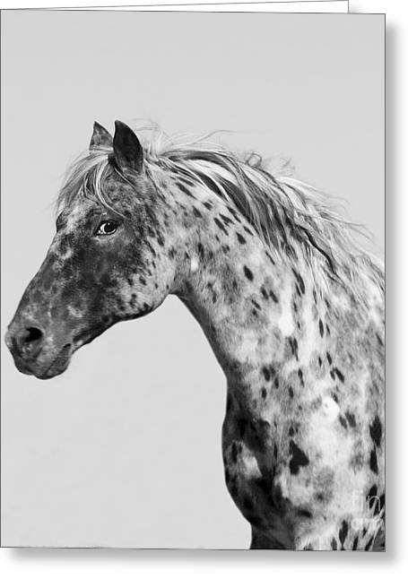 Spotted Horse Greeting Cards - Leopard Appaloosa Runs Greeting Card by Carol Walker
