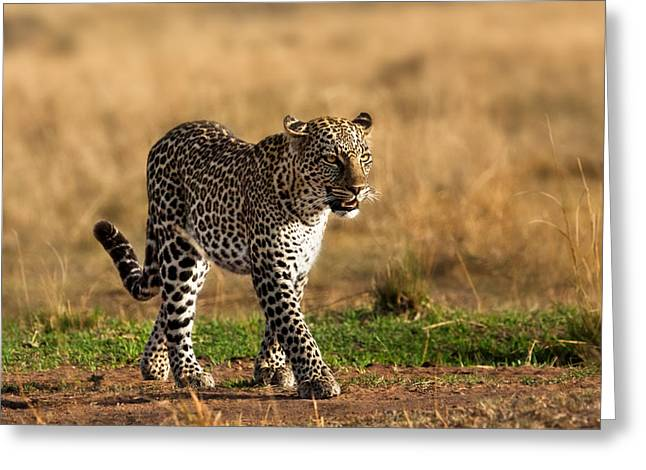 Cat Pyrography Greeting Cards - Leopard Binti Masai Mara Greeting Card by Maggy Meyer