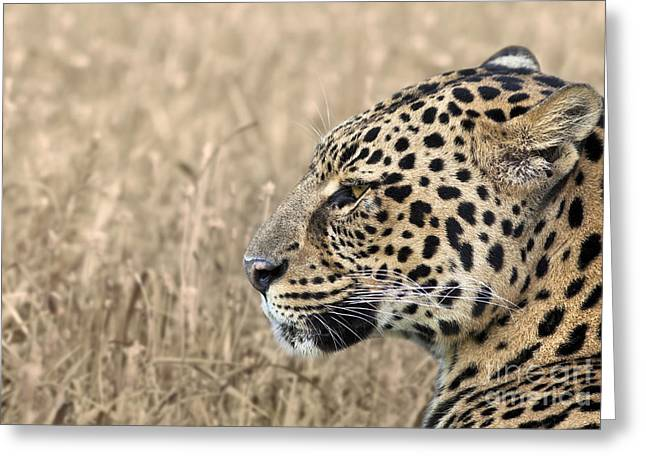 Leopard Face Greeting Cards - Leopard Closeup Greeting Card by Brandon Alms