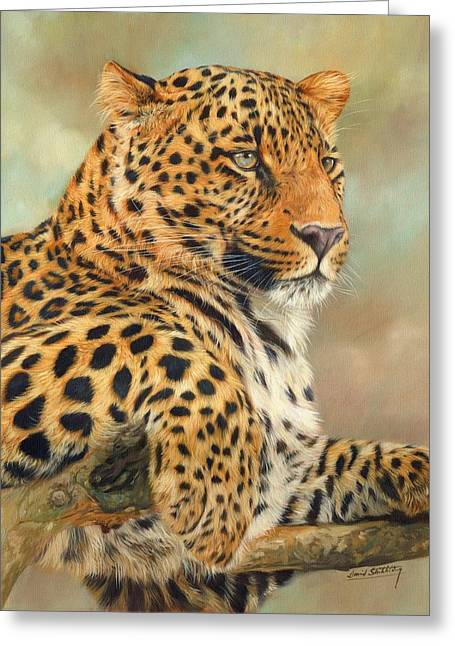 Wildlife Art Prints Greeting Cards - Leopard Greeting Card by David Stribbling