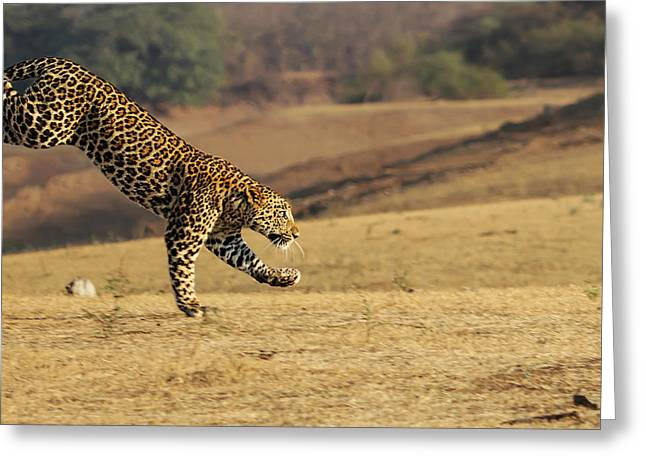 Leopard Running Greeting Cards - Leopard on Move Greeting Card by Suneet Bhardwaj