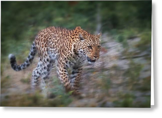 Leopard Running Greeting Cards - Leopard on the Prowl Greeting Card by Sylvia J Zarco