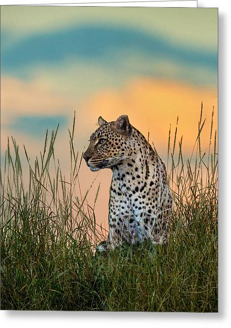 Threatened Species Greeting Cards - Leopard Panthera Pardus, Serengeti Greeting Card by Panoramic Images