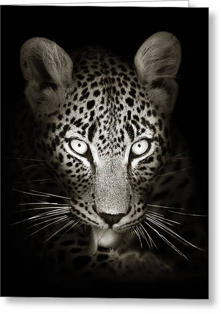 """wild Cat"" Greeting Cards - Leopard portrait in the dark Greeting Card by Johan Swanepoel"