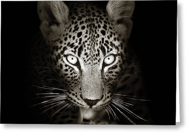 Leopard Portrait In The Dark Greeting Card by Johan Swanepoel