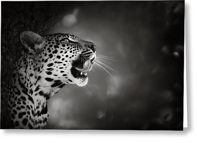 Up Close Greeting Cards - Leopard portrait Greeting Card by Johan Swanepoel