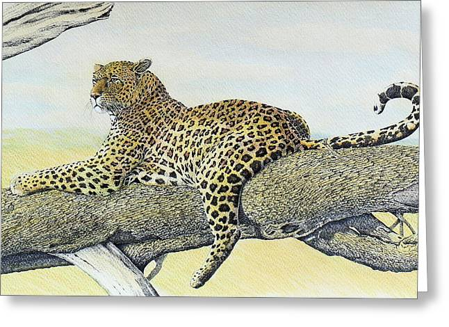 Pen And Ink Drawing Greeting Cards - Leopard Resting Greeting Card by Charles Berry