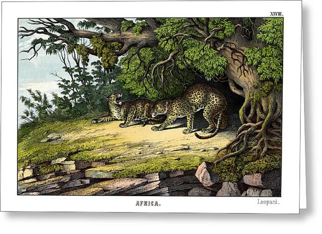 Leopard Drawings Greeting Cards - Leopard Greeting Card by Splendid Art Prints