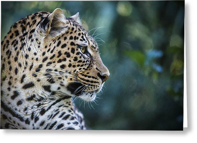 Leopard Skin Greeting Cards - Leopards Look Greeting Card by Jaki Miller