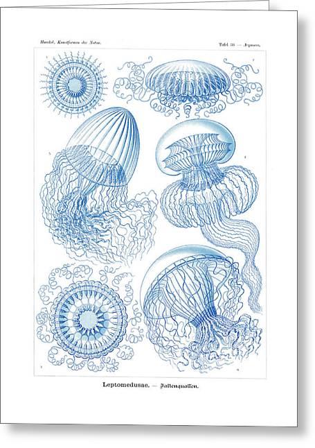 Leptomedusae Greeting Card by Ernst Haeckel