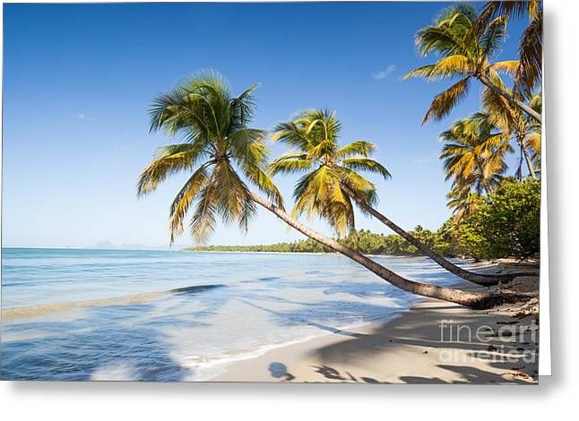 Tropical Beach Greeting Cards - Les Salines beach Greeting Card by Matteo Colombo