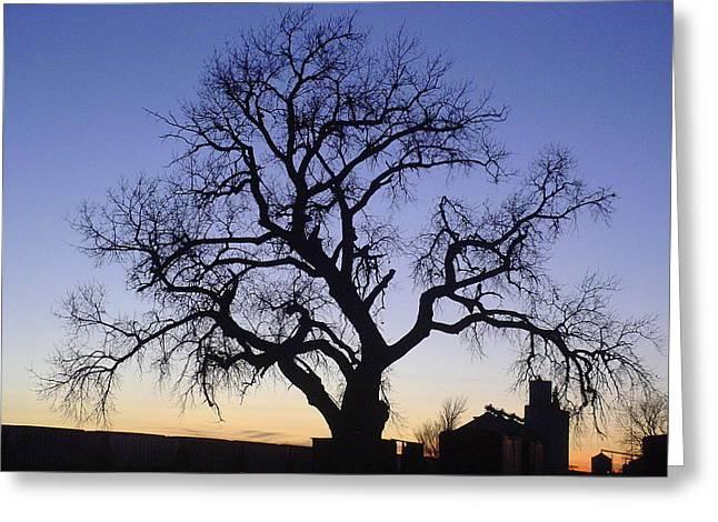 Kansas Pyrography Greeting Cards - Leslies Tree Greeting Card by Cary Amos