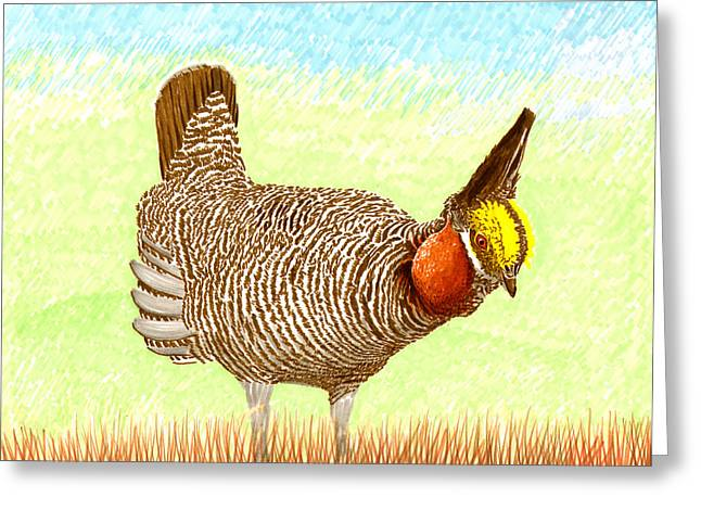Energy Conversion Paintings Greeting Cards - Lesser Prairie Chicken Greeting Card by Jack Pumphrey