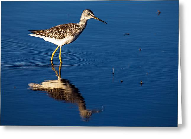 Lessor Greeting Cards - Lessor Yellow Leg  Greeting Card by Gerald Murray Photography