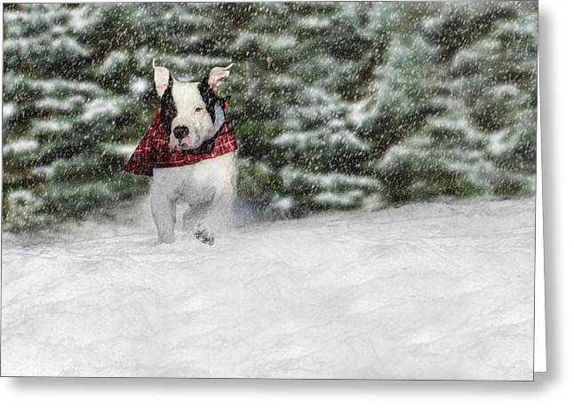 Bully Greeting Cards - Snow Day Greeting Card by Shelley Neff
