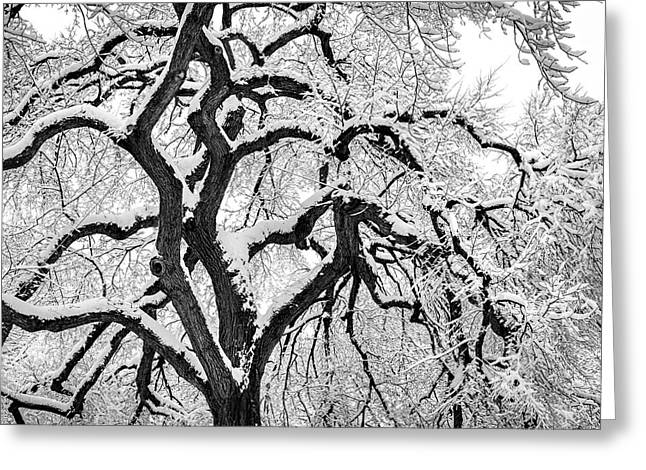 White City Park Greeting Cards - Let It Snow Greeting Card by Susan Candelario