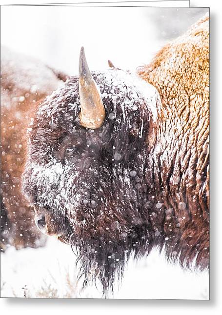 White Thick Fur Greeting Cards - Let it snow Greeting Card by Thomas Szajner
