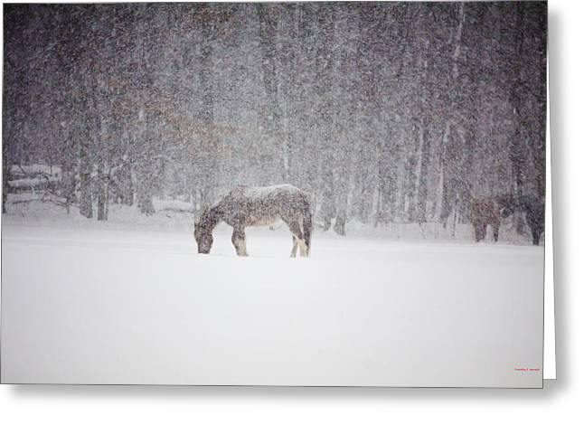 Timothy J Berndt Greeting Cards - Let It Snow Greeting Card by Timothy J Berndt