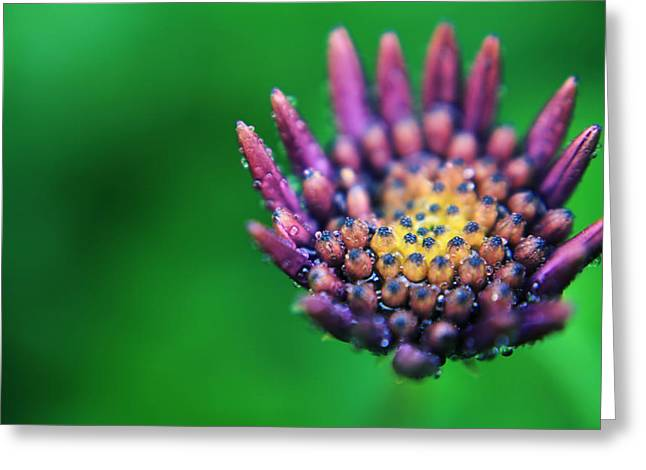 Dew Drop Greeting Cards - Let Love Grow Greeting Card by Laurie Search
