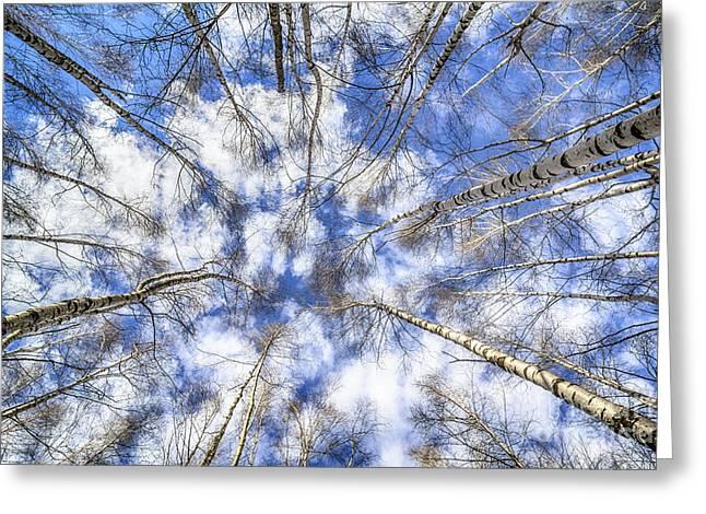 Peisaj Photographs Greeting Cards - Let me Lord Wind ... Greeting Card by Adrian Urbanek
