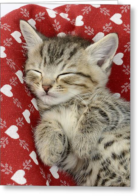 Tabby Greeting Cards - Let Me Sleep Greeting Card by Greg Cuddiford